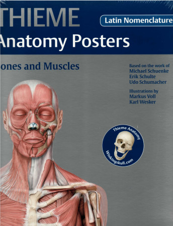 Thieme Anatomy Poster